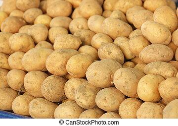 Young potatoe harvest close up.