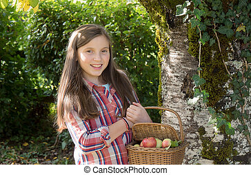 young pre teenager picking apples in the garden