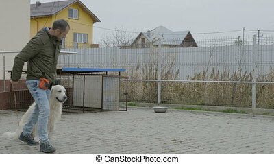 Young professional trainer walking a white dog at a special...
