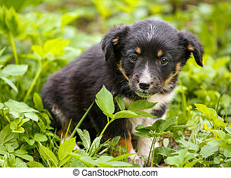 Young puppy dog photographed outdoors in the grass