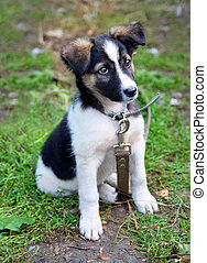 young puppy dog sitting on grass looking stare