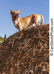Young Puppy on hay bale