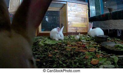 Young rabbits in a hotel lobby front view.