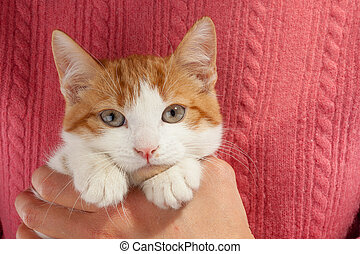 Young red kitten sits in the hands