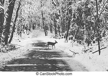 Young roe deer in a winter forest