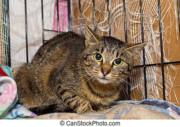 Young, scared cat in the shelter cage