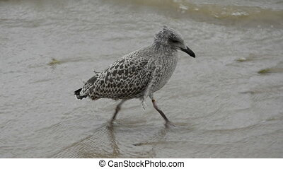 young  seagull on sea beach