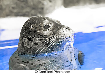 Young seal in the water.