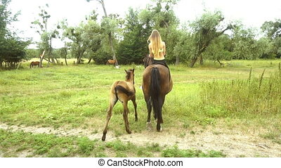 young skinny rider on horseback comes near a foal by nature