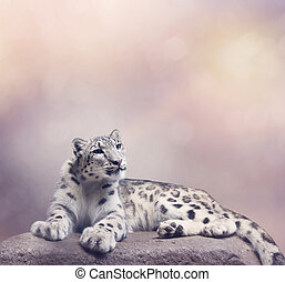 Young Snow leopard portrait