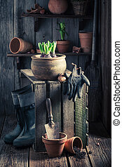 Young spring flowers in old wooden shed