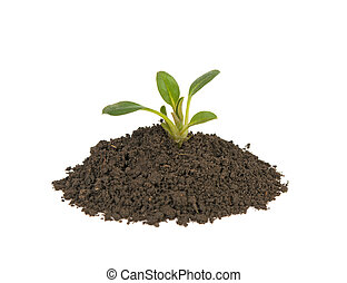 young sprout in the ground on a white background