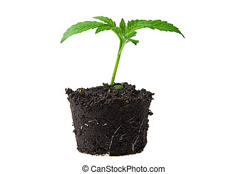 young sprout in top soil
