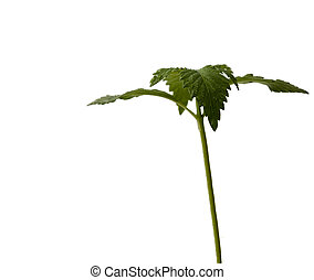 young sprout isolated on white