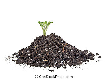 Young sprout of potato in soil humus on a white background