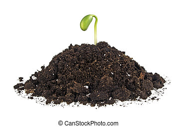 Young sprout of soy in soil humus on a white background