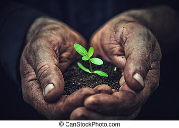 young sprout plants in old dirty hands, concept - the young...