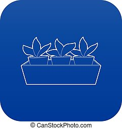 Young sprout seedlings in a flower box icon blue vector