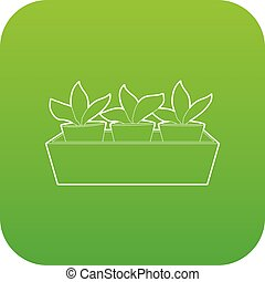 Young sprout seedlings in a flower box icon green vector