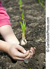 Young sprouts in the hands of a child