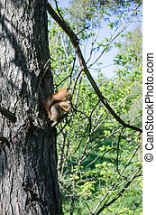 young squirrel on a tree eating bread