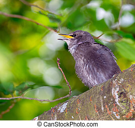 Young starling bird sitting on the branch of a tree