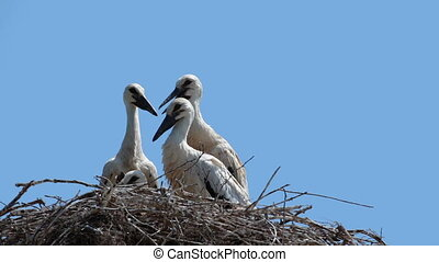 young storks HD