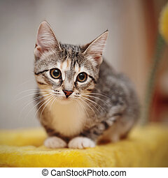 Young striped cat with brown eyes - The young striped cat...