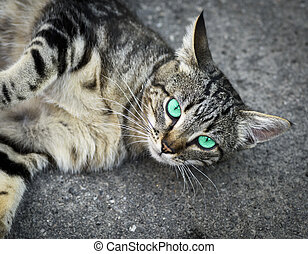 gray cat with green eyes lies on the gray asphalt