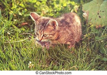 Young tabby cat after hunting - with caught mouse in mouth