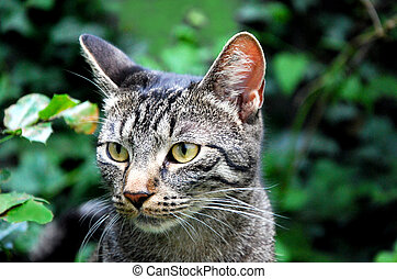 young tabby cat in front of green background
