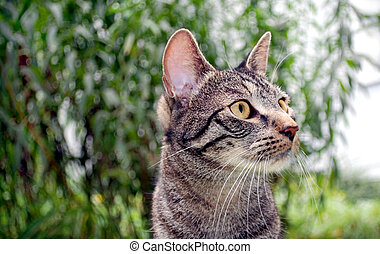 young tabby cat in front of shallow bushes
