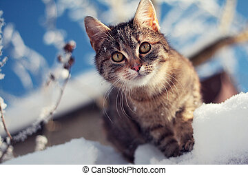 young tabby cat in winter on snow