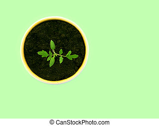 Young tomato sprout in a pot on green backgound.