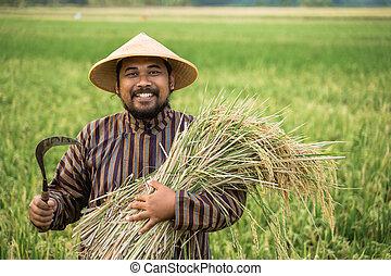 asian farmer with rice grain on hand