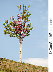 Young tree blooming in flowers