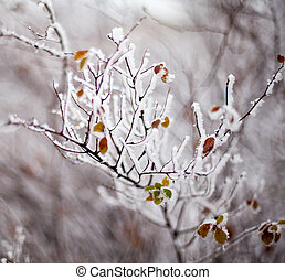 Young tree branches covered with hoarfrost