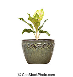 Young tree in ceramic pot isolated on white background