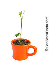 Young tree in pot orange