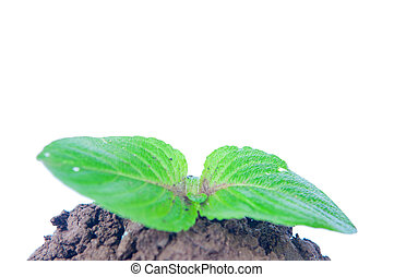 Young tree on white background