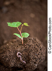 Young tree plant in a soil