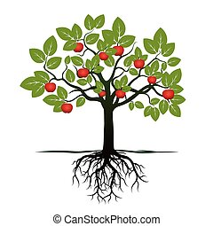 apple tree with roots clipart. young tree with green leafs, roots and red apples. vector illustration. apple clipart