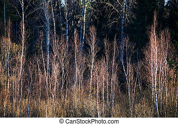young trees in forest on edge of swam