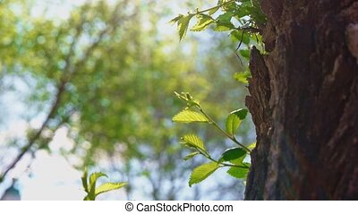 Young twigs grows on elm tree trunk closeup