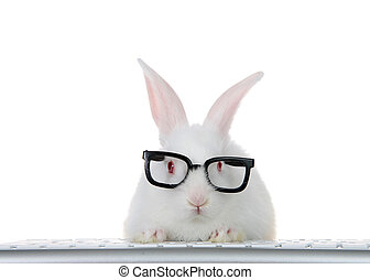Young white bunny wearing geeky glasses at computer