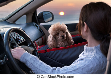Young woman driving the car and dog traveling in a car seat the front seat of a car.