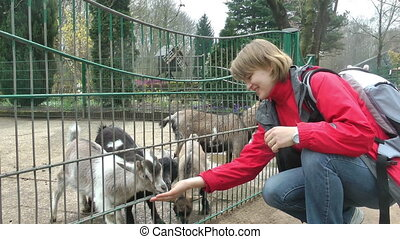 Young woman feeding baby goats