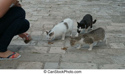 Young woman feeds hungry cats on the stone pavement in the city.