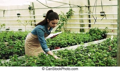 Young woman gardener in a large greenhouse.