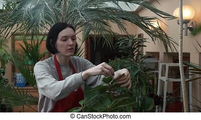 Young woman gardener in apron taking care of plants and flowers in greenhouse